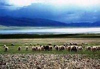 草原第一敕勒歌 - 嵕山老牛 - 嵕山老牛的博客