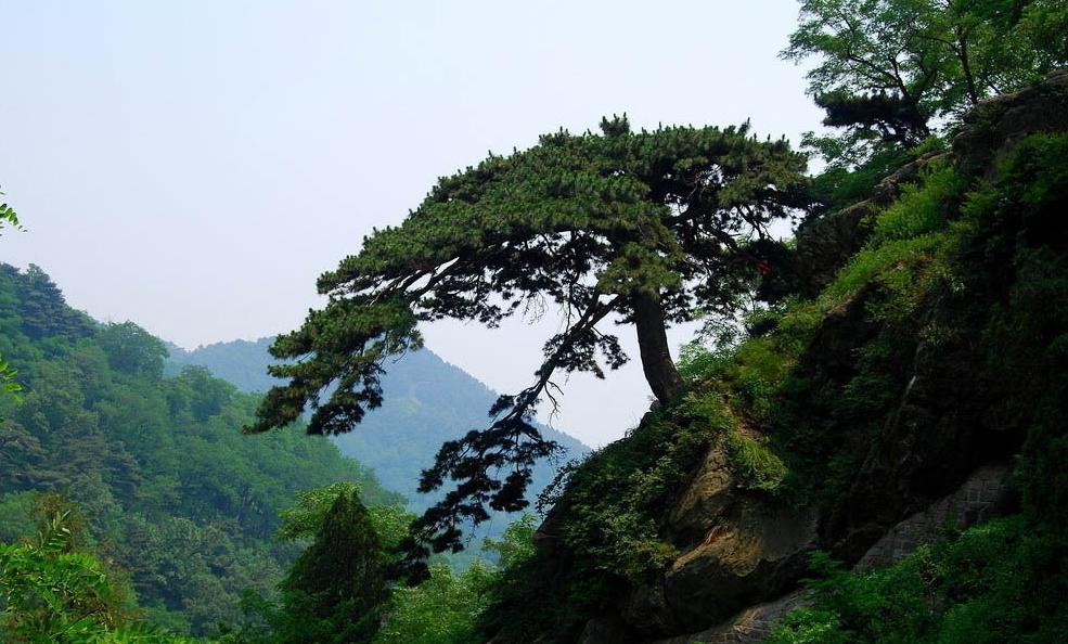泰山经典风景图片大全