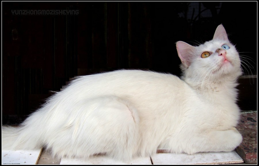 猫是哺乳型的胎生动物