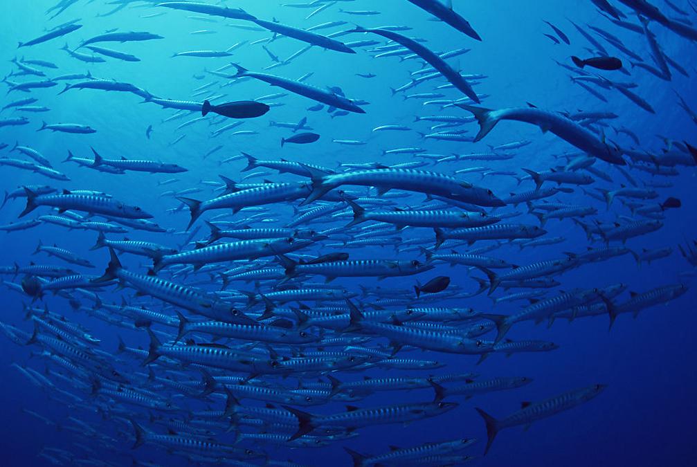 深海地质结构的研究