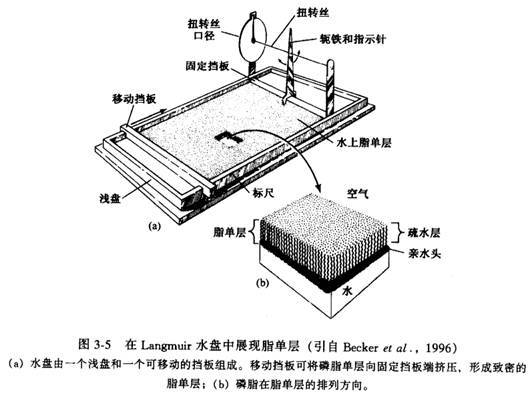 模型车身外部结构