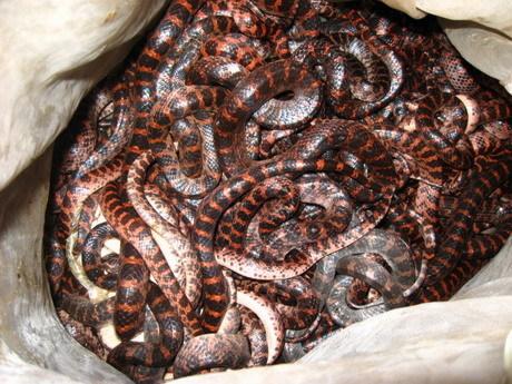 蛇木头箱子