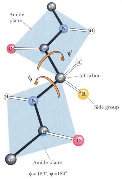 蛋白质二级结构
