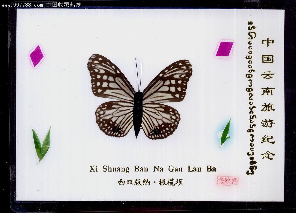 中 文 名 条纹蝶