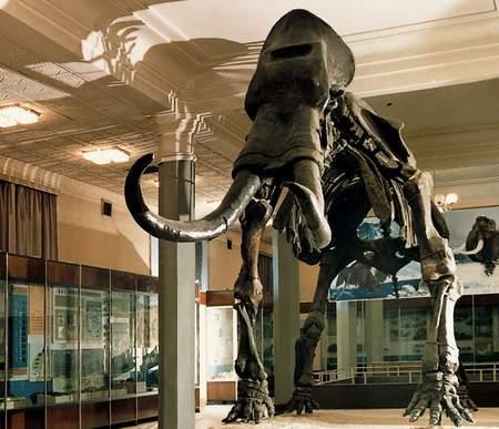 内蒙古自治区博物馆图片