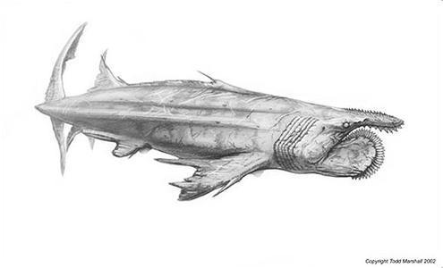 动物 素描 鱼 鱼类